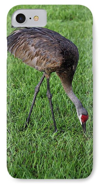 IPhone Case featuring the photograph Sandhill Crane II by Richard Rizzo