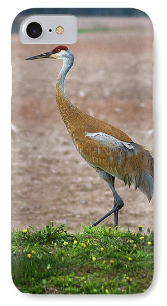 IPhone Case featuring the photograph Sandhill Crane In Profile by Bill Pevlor