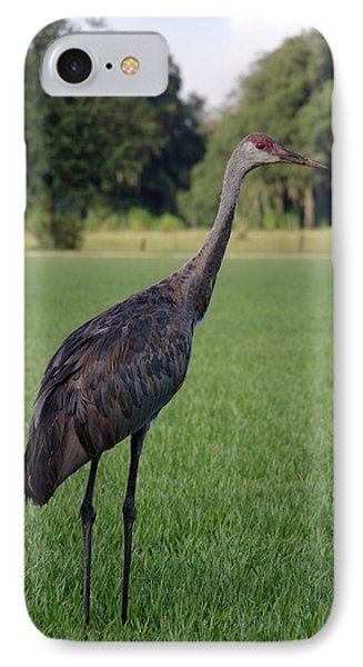 IPhone Case featuring the photograph Sandhill Crane by Richard Rizzo