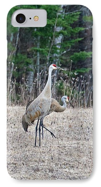 IPhone Case featuring the photograph Sandhill Cranes 1166 by Michael Peychich