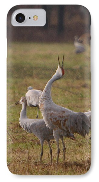 IPhone Case featuring the photograph Sandhill Delight by Shari Jardina