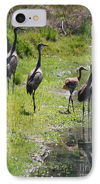 Sandhill Family By The Pond Phone Case by Carol Groenen