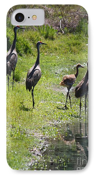 Sandhill Family By The Pond IPhone Case