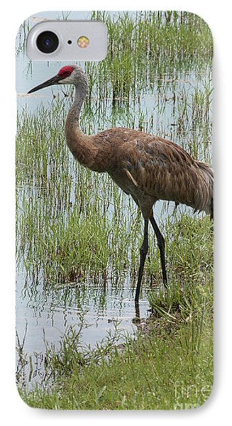 Sandhill In The Marsh Phone Case by Carol Groenen