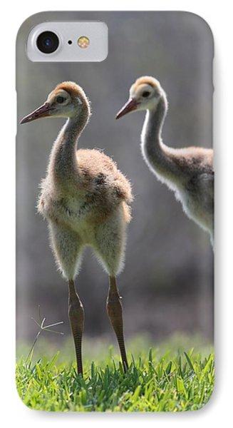 Sandhill Siblings IPhone Case by Carol Groenen