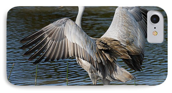 Sandhill Crane Wingstretch IPhone Case