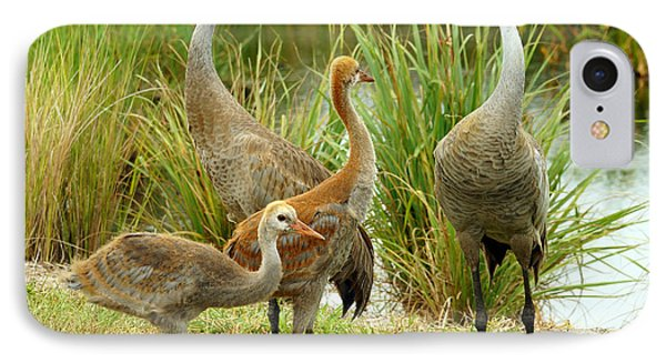 Sandhill Cranes On Alert IPhone Case