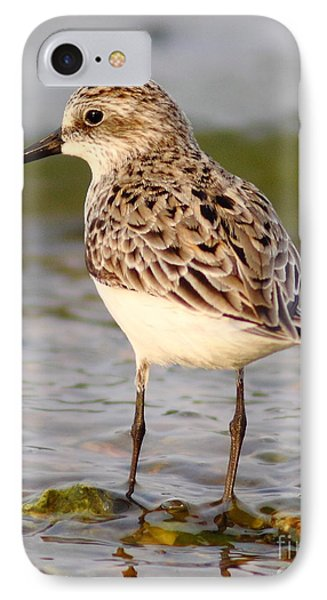 Sandpiper Portrait IPhone Case