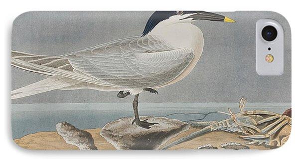 Sandwich Tern IPhone Case by John James Audubon