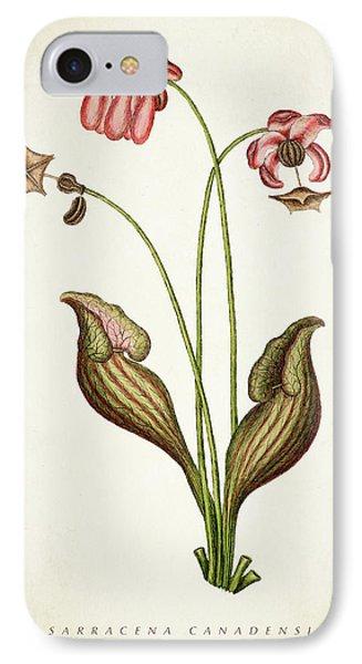 Sarracena Canadensis Botanical Print IPhone Case by Aged Pixel