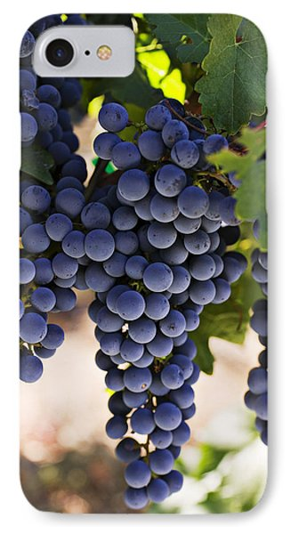 Sauvignon Grapes IPhone Case by Garry Gay