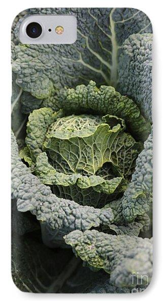Savoy Cabbage In The Vegetable Garden Phone Case by Carol Groenen