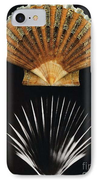Scallop Shell X-ray Phone Case by Photo Researchers
