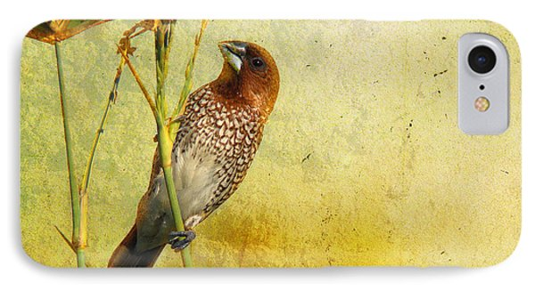 Scaly-breasted Munia IPhone Case by Perry Van Munster