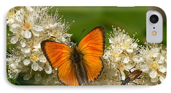 IPhone Case featuring the photograph Scarce Copper 2 by Jouko Lehto