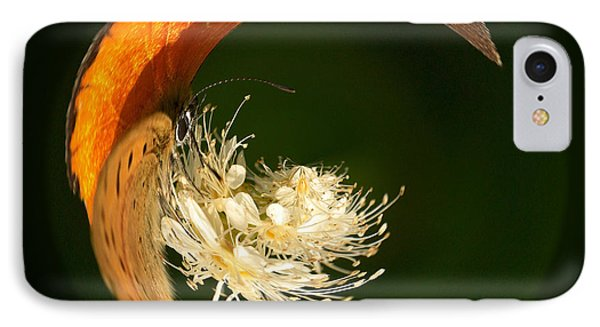 IPhone Case featuring the photograph Scarce Copper 4 by Jouko Lehto