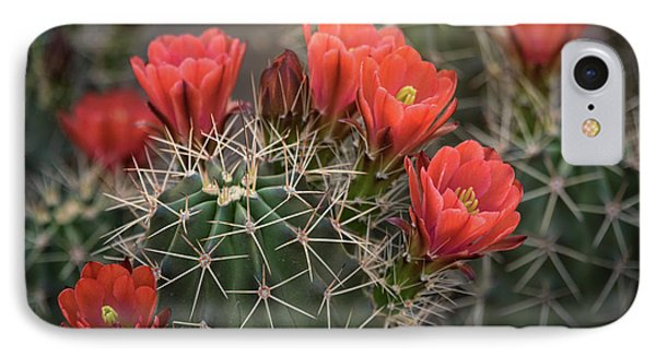 IPhone Case featuring the photograph Scarlet Hedgehog Cactus  by Saija Lehtonen