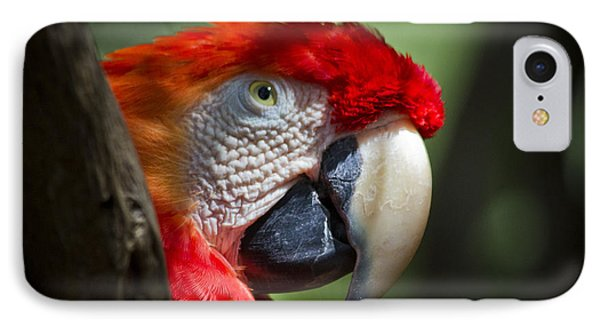 Scarlet Macaw Phone Case by Roger Wedegis