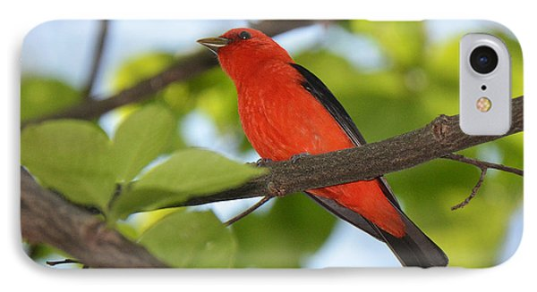 Scarlet Tanager IPhone Case