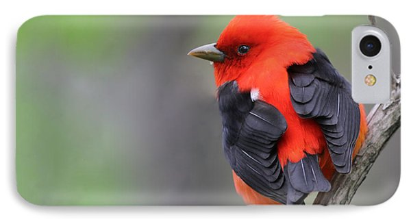 Scarlet Tanager Phone Case by Mircea Costina Photography