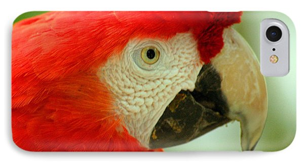 Scarlett Macaw South America IPhone Case by Ralph A  Ledergerber-Photography