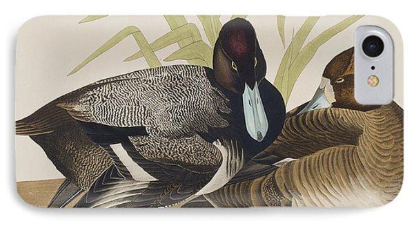 Scaup Duck IPhone Case by John James Audubon