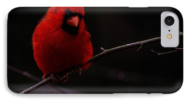 IPhone Case featuring the photograph Scene Stealer  by John Harding