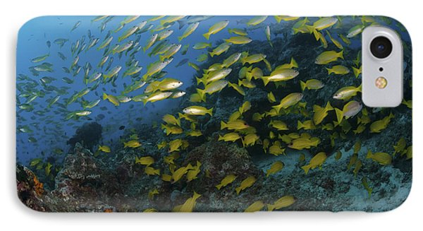 School Of Yellow Snapper, Great Barrier Phone Case by Mathieu Meur