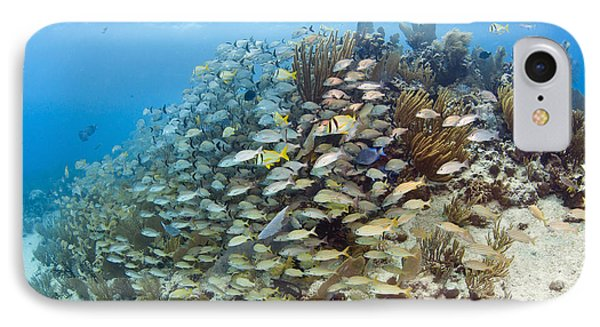 Schools Of Grunts, Snappers, Tangs Phone Case by Karen Doody