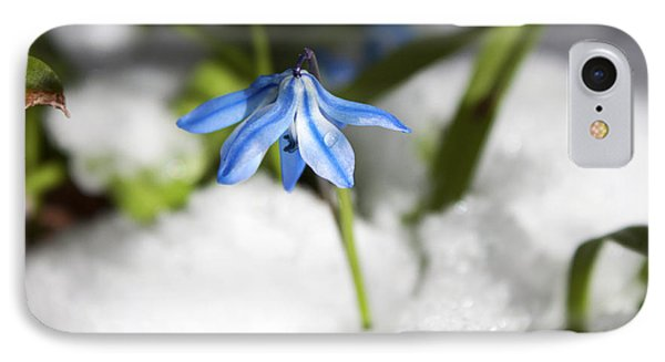 IPhone Case featuring the photograph Scilla In Snow by Jeff Severson