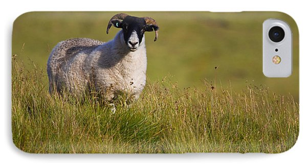 IPhone Case featuring the photograph Scottish Blackface Sheep On Green Field by Gabor Pozsgai