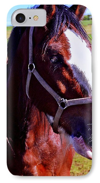 Scottish Clydesdale  Phone Case by Roger Wedegis