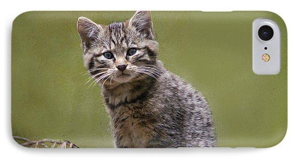 Scottish Wildcat Kitten IPhone Case