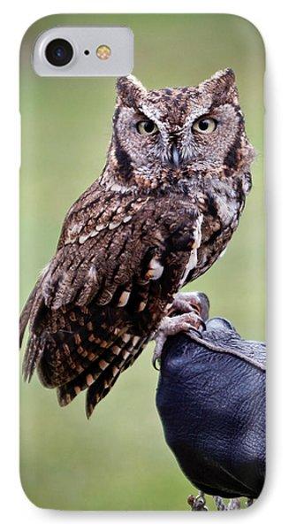 Screech Owl Perched Phone Case by Athena Mckinzie