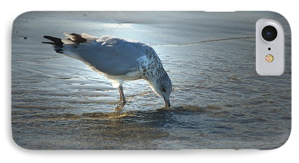 Sea Gull At Sundown IPhone Case by Margie Avellino