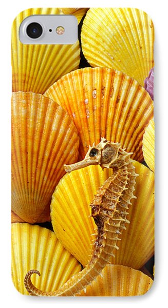 Sea Horse And Sea Shells IPhone Case by Garry Gay