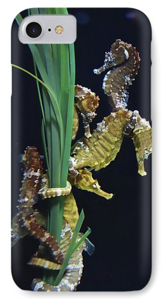 IPhone Case featuring the photograph Sea Horse by Joan Reese
