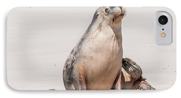 Sea Lion 1 IPhone 7 Case by Werner Padarin