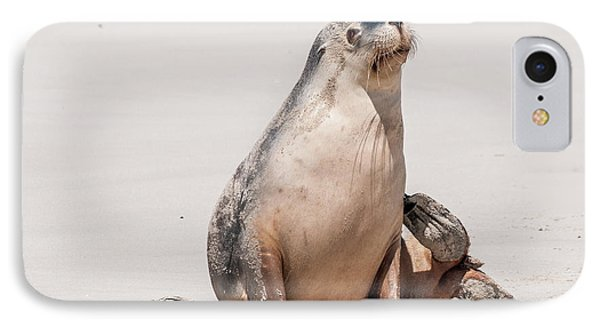 Sea Lion 1 IPhone Case by Werner Padarin