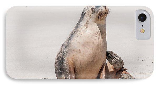 Sea Lion 1 IPhone Case