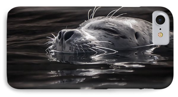 Sea Lion Basking In The Light IPhone Case