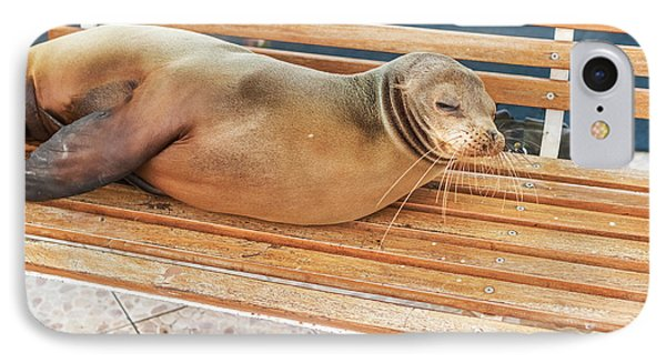 Sea Lion On A Bench, Galapagos Islands IPhone Case by Marek Poplawski
