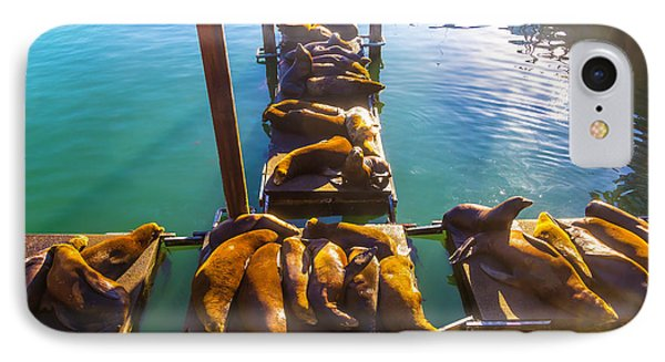 Sea Lions Sunning On Dock IPhone Case by Garry Gay