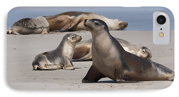 IPhone 7 Case featuring the photograph Sea Lions by Werner Padarin
