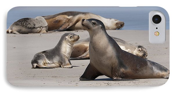 IPhone Case featuring the photograph Sea Lions by Werner Padarin