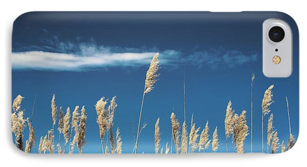 IPhone Case featuring the photograph Sea Oats On A Blue Day by Colleen Kammerer