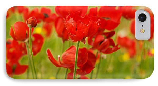 Sea Of Red Buttercups IPhone Case by Uri Baruch