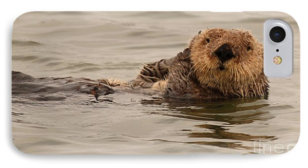 IPhone Case featuring the photograph Sea Otter All Cuddled Up by Max Allen