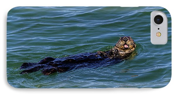 Sea Otter IPhone Case by Randy Bayne