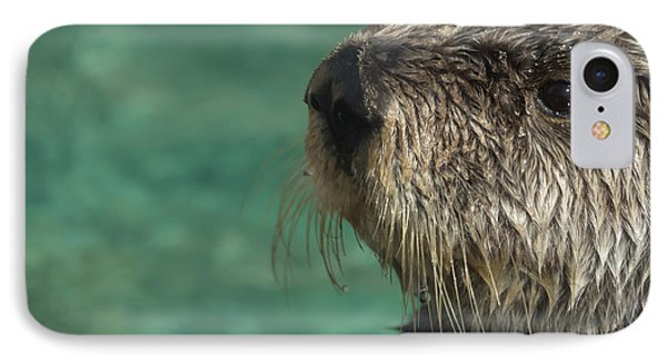 Sea Otter Stare Down IPhone Case